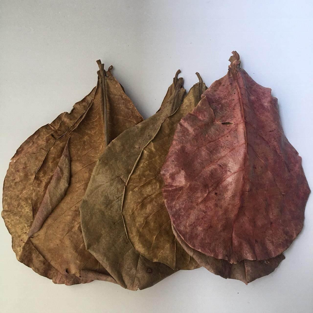 ใบหูกวางตากแห้ง ใบหูกวาง หูกวาง 100กรัม Indian Almond Leaves อาหารปลา ปลากัด กุ้งฝอย การเลี้ยง ปลาสวยงาม หมัก โหล ตู้ปลา ปลา กัด เก่ง สวย ใบ ราคา ถูก กุ้งเครฟิช กุ้งเครย์ฟิช ปรับสภาพน้ำ โรค ป้องกัน สะอาด โตเร็ว วิธี ง่าย ปลอดภัย ประโยชน์ แก้ปัญหา