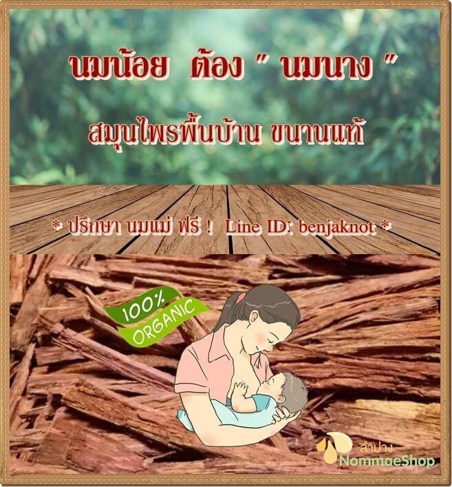 ✅ถูกสุด! เปลือกไม้นมนาง สมุนไพรกระตุ้นนมแม่ขนานแท้ ฟรี! ถุงผ้าสำหรับต้มดื่ม.