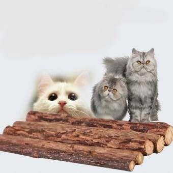 5 ชิ้นสัตว์เลี้ยงเคี้ยวสติ๊กธรรมชาติ MATATABI หญ้าชนิดหนึ่งก้านไม้ตำแยแมวขนมแมวแมวกรรไกรตัด Molar ของเล่น - นานาชาติ