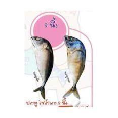 ขาย ปลาทูแคทนิป ปลาทูของเล่นแมวขนาดกลาง 9 นิ้ว ปลาทูทอด Haru