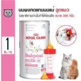 ราคา Royal Canin นมผงทดแทนนมแม่ รสชาติทานง่านไม่ทำให้ท้องเสีย สำหรับลูกแมวแรกเกิดอายุ 3 เดือน ขนาด 300 กรัม แถมฟรี จุกขวดนม 1 เซ็ต ถูก