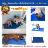 ส่วนลด ที่นอนเจลเย็นหมา แผ่นเจลรองนอนหมา แผ่นเจลเย็นสุนัข ที่นอนเจลเย็นสำหรับสุนัข Size Xl 50X90 Cm