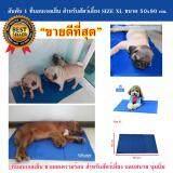 Smartshopping ที่นอนเจลเย็นหมา แผ่นเจลรองนอนหมา แผ่นเจลเย็นสุนัข ที่นอนเจลเย็นสำหรับสุนัข Size Xl 50X90 Cm ใน กรุงเทพมหานคร