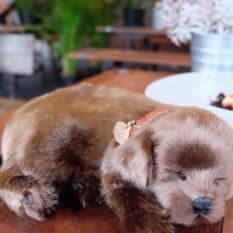 ขาย ตุ๊กตาหมาน้อย Chocolate Lab Puppy Unbranded Generic เป็นต้นฉบับ
