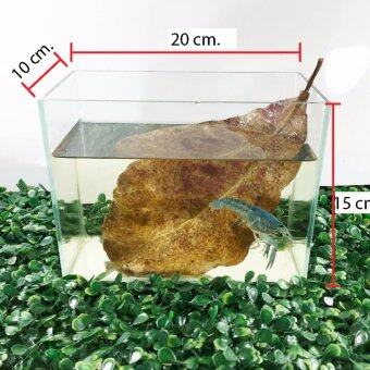 ตู้กระจกเลี้ยงกุ้ง ปลา เต่า สวยงาม กระจกใสขนาด ยาว 8\ กว้าง 4\ สูง 6\