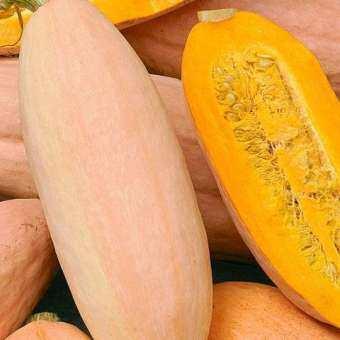 เมล็ดพันธุ์ ฟักทองกล้วยสีชมพู (Pink Banana Squash Seed) บรรจุ 10 เมล็ด คุณภาพดี ราคาถูก ของแท้ 100%