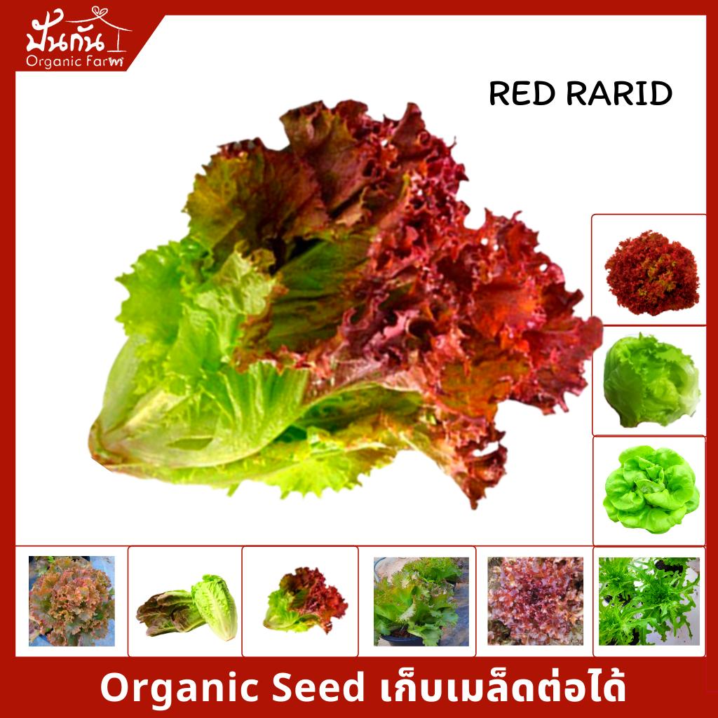 เมล็ดพันธุ์ ผักสลัด จากฟาร์มผู้ปลูกจริง [salad Organic Seeds] บัตเตอร์เฮด, สลัดแก้ว, เรดเรปิด, เรดเบบี้คอส, เรดโครอล, เรดบัตตาเวีย, กรีนโบว์, กรีนบัตตาเวีย [70เมล็ดต่อซอง].