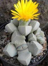100 เมล็ดแคคตัส เมล็ดกระบอกเพชร เมล็ดพันธุ์ Cactus กระบองเพชรจิ๋ว ต้นกระบองเพชร กระบองเพชร ไม้อวบน้ำ พืชอวบน้ำ Succulent  ต้นไม้ ไม้มงคล ไม้เล็ก ธรรมชาติ ต้นไม้ตั้งโต๊ะ จัดสวน ไม้หนาม ของชำรวย ของขวัญ ของแต่งบ้าน แคคตัสน่ารัก แคคตัสสวยๆ 1113050..