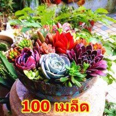 100 เมล็ด พืชอวบน้ำ Lithops Seeds เมล็ดไลทอป คละชนิด ไลทอป Lithops เมล็ดดอกไม้ เมล็ด แคคตัสพืชอวบน้ำ. By Mongkol Life.