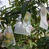 ราคา 50Pcs Set Garden Plant Against Insect Fruit Protect Drawstring Mesh Net Bag Intl ถูก