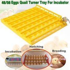 ราคา 55 Egg Automatic Incubator Tray Digital Hatching Chicken Temperature Control Intl Unbranded Generic