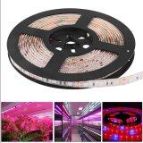 ส่วนลด 5M 5050 300Smd Red Blue Plant Grow Led Strip Light Lamp Flexible Dc 12V Intl จีน