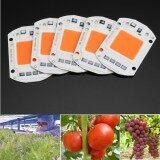 ขาย 5Pcs 50W Full Spectrum Cob Led Chip High Power 220V Flower Plant Grow Light Set Intl เป็นต้นฉบับ