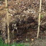ส่วนลด ประมาณ 8 กิโลกรัม Compost ดินปลูกสูตรเข้มข้นบ้านสวนพอเพียงมหาราช สารปรับปรุงดิน อินทรีย์วัตถุ100 หมักจากขี้ไก่แกลบ และหรือขี้วัว ฟางและหรือใบไม้แห้งสด และหรือวัชพืช สำหรับผสมดินและเหมาะอย่างยิ่งกับการโรยรอบบริเวณพืชเป็นอาหารพืชอย่างดี