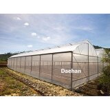ขาย Daehan พลาสติกใสคลุมโรงเรือน ขนาด 4X6 Daehan ใน กรุงเทพมหานคร