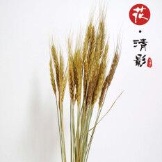 ราคา ชนบทข้าวสาลีธรรมชาติดอกไม้แห้งช่อ ออนไลน์ ฮ่องกง