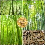 ส่วนลด เมล็ดพืช Seeds เมล็ดต้นไผ่ ญี่ปุ่น Bamboo เมล็ดพันธุ์ คุณภาพ 70 80 เมล็ด กรุงเทพมหานคร