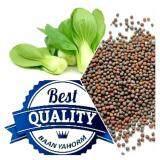 ความคิดเห็น เมล็ดพืช Seeds กวางตุ้ง ฮ่องเต้ Chinese Cabbage เมล็ดพันธุ์ คุณภาพดี 1 ซอง 1 000 เมล็ด