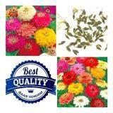ซื้อ เมล็ดพืช Seeds ดอกบานชื่นหนู คละสี Zinnia Flower Mix เมล็ดพันธุ์คุณภาพ 1 กรัม 100 เมล็ด