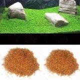 ซื้อ เมล็ด หญ้าน้ำ Water Grass Mini Leaf ใบเล็ก สำหรับปลูกตกแต่งตู้ปลา ตู้ไม้น้ำ ออนไลน์