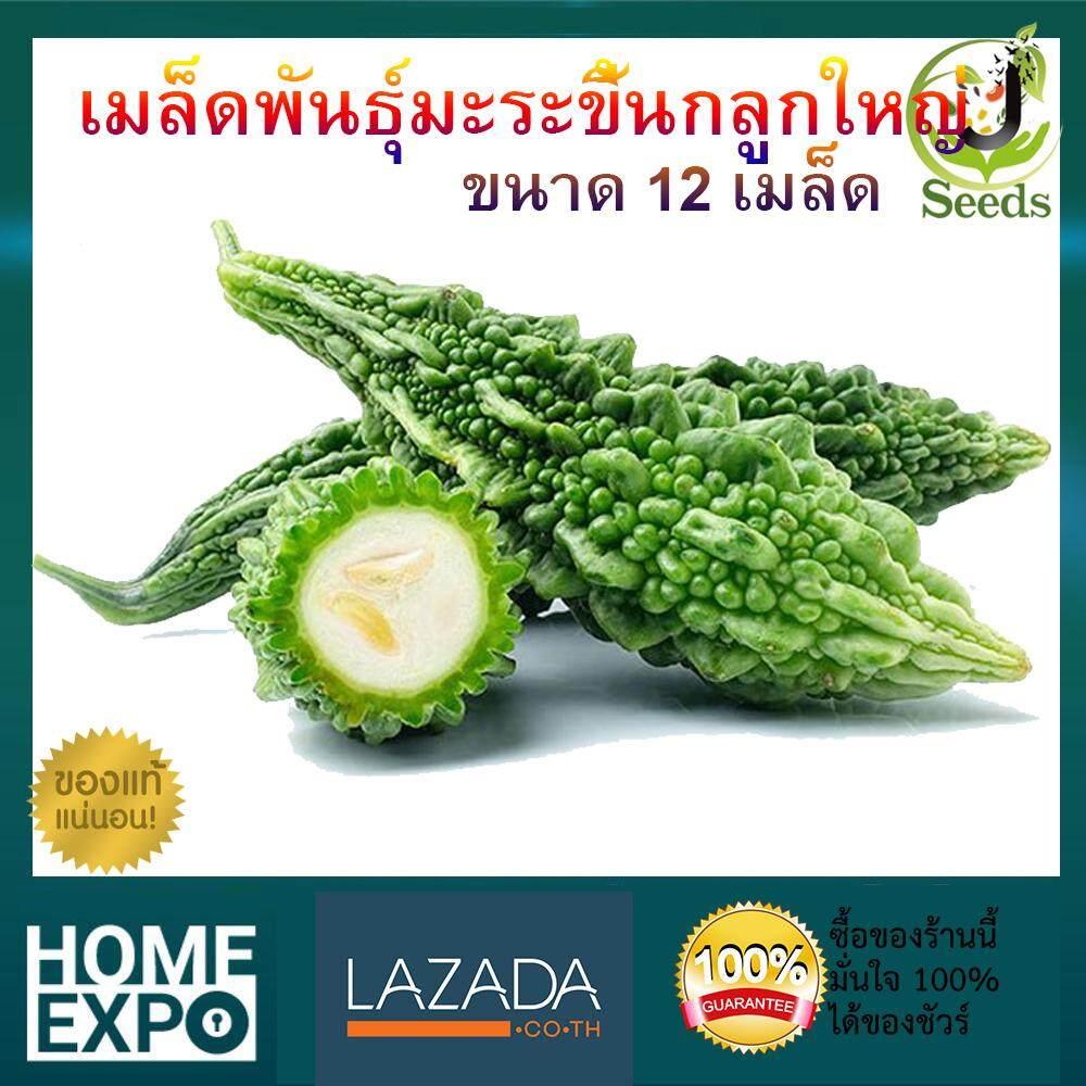 เมล็ดพันธุ์มะระขี้นกลูกใหญ่ จำนวน 12 เมล็ด ปลูกง่าย โตเร็ว By Jenseed มะระขี้นก เมล็ดพันธุ์ เมล็ดพันธุ์ผัก เมล็ดพันธุ์พืช ผักสวนครัว.