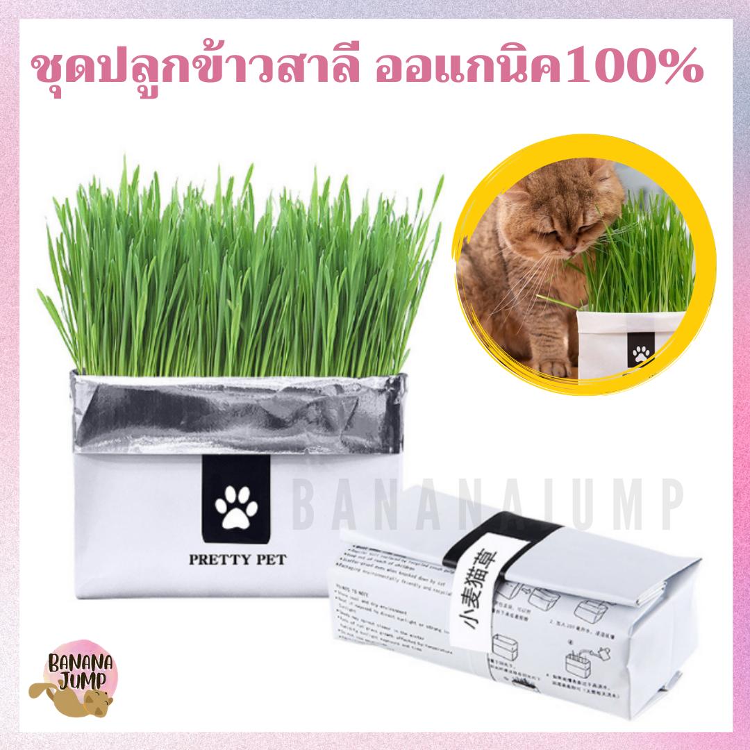 Bj Pet - ชุดปลูกข้าวสาลี ออร์เเกนิค สำหรับแมว เมล็ดข้าวสาลี หญ้าแมว ข้าวสาลี สำหรับสัตว์เลี้ยง.