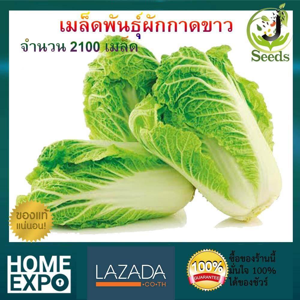 เมล็ดพันธุ์ผักกาดขาว จำนวน 2100 เมล็ด ปลูกง่าย โตเร็ว By Jenseed ผักกาดขาว เมล็ดพันธุ์ เมล็ดพันธุ์ผัก เมล็ดพันธุ์พืช ผักสวนครัว.