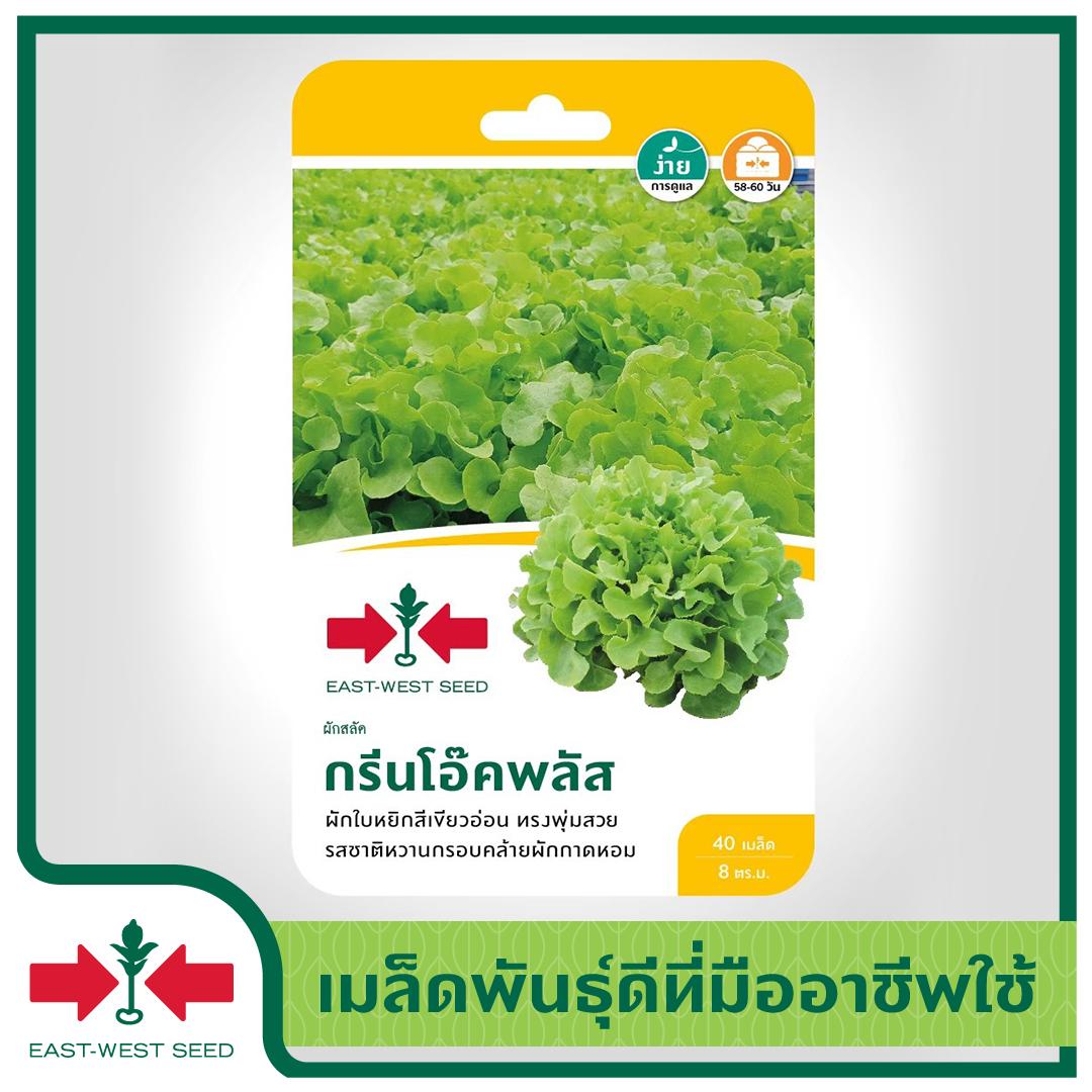 East-West Seed เมล็ดพันธุ์ผักสลัด (lettuce Seeds)  กรีนโอ๊คพลัส เมล็ดพันธุ์ผัก เมล็ดพันธุ์ ผักสวนครัว เมล็ดผักสลัด กรีนโอ๊ค ตราศรแดง.