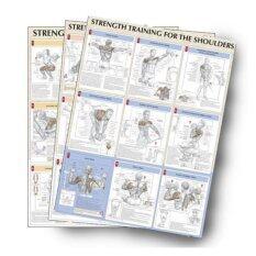 ราคา Viva ชุดโปสเตอร์สีประกอบการเล่นกล้าม จำนวน7แผ่น Strength Training Anatomy Poster Set ราคาถูกที่สุด