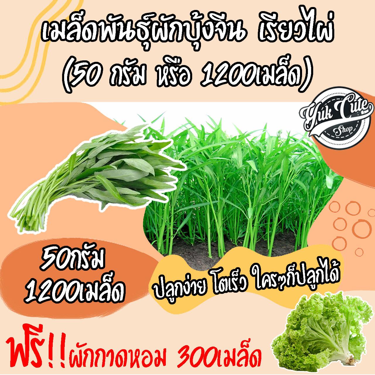 (แถมเมล็ดผักสลัด) เมล็ดพันธุ์ผักบุ้งจีน เรียวไผ่ 1200 เมล็ด อัตราการงอก 85% ผักบุ้งจีน ผักบุ้ง เมล็ดผัก ผักสวนครัว เมล็ดพืช พืช พันธุ์พืช.
