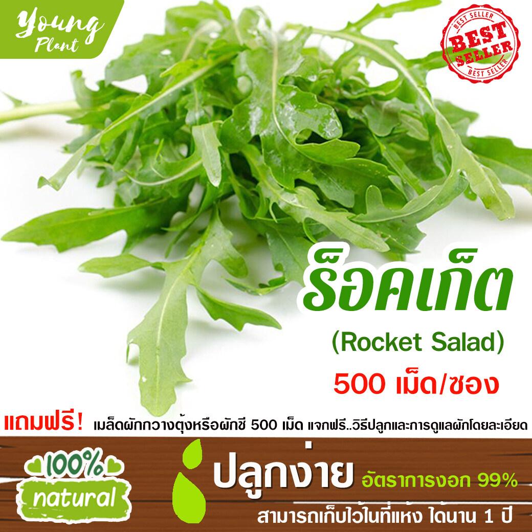 เมล็ดพันธุ์ผักสลัด ร็อคเก็ตสลัด 500เมล็ด อัตราการงอก95% เมล็ดพันธุ์ ผักสลัด เมล็ดผัก เมล็ดผักสลัด(แถมฟรี!!! เมล็ดผักกวางตุ้ง500 เม็ด).