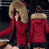 ทบทวน 2017 Winter Korean Version Of The New Short Paragraph Slim Cotton Coats Large Fur Collar Down Cotton Clothing Intl