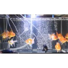 ขาย สายยางเติมอากาศ ยาว 20 ซม 2 เส้น เพิ่มออกซิเจนในน้ำ เพิ่มความสวยงามในตู้ปลากุ้ง Unbranded Generic ออนไลน์