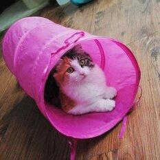 ซื้อ Indoor Cat Kitten Play Tunnel Playing Toy Collapsible Tunnel With Hanging Ball Intl Nexlux ออนไลน์