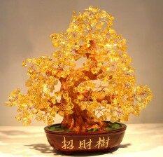ต้นไม้มงคล รวย ต้นไม้ตั้งโชว์citrine.