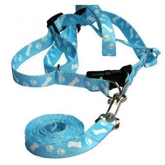 สายรัดหน้าอกพร้อมสายจูงสำหรับสุนัขขนาดเล็ก ลายกระดูกสีฟ้า