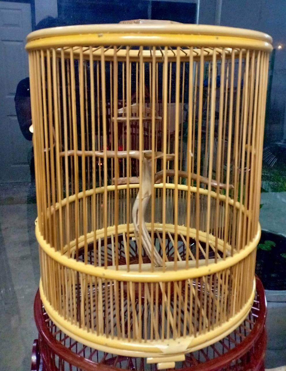 กรงหวาย ขนาด 10 นกกรงหัวจุก By Bird Khaoyai.