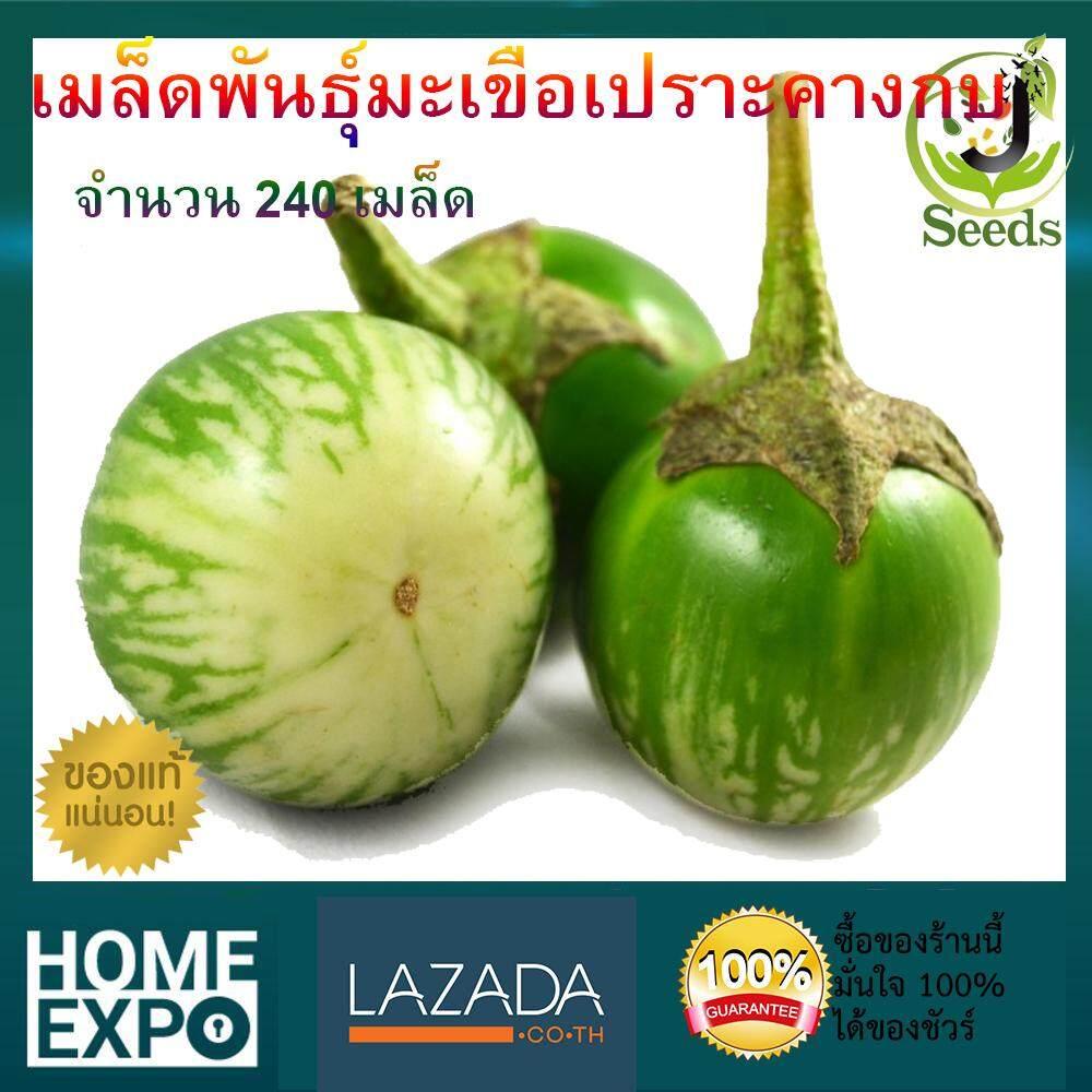 เมล็ดพันธุ์มะเขือเปราะคางกบ 240 เมล็ด ปลูกง่าย โตเร็ว ติดผลดก By Jenseed มะเขือ เมล็ดพันธุ์ เมล็ดพันธุ์ผัก เมล็ดพันธุ์พืช ผักสวนครัว.