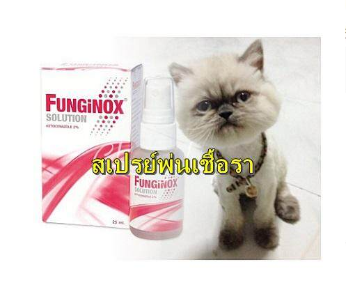 Funginox Solution รักษาเชื้อรา โรคผิวหนัง เชื้อราแมว ใช้ได้ทั้งคน และสัตว์ สเปรย์พ่นเชื้อราของแท้ คุณภาพดี คุ้มค่า By Flexum Mall.