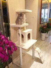 คอนโดแมว catcondo บ้านแมว ที่นอนแมว รุ่น Best Seller (สีครีม)