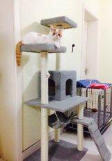 ซื้อ คอนโดแมวCatcondoบ้านแมว ที่นอนแมว รุ่นBest Seller สีเทา