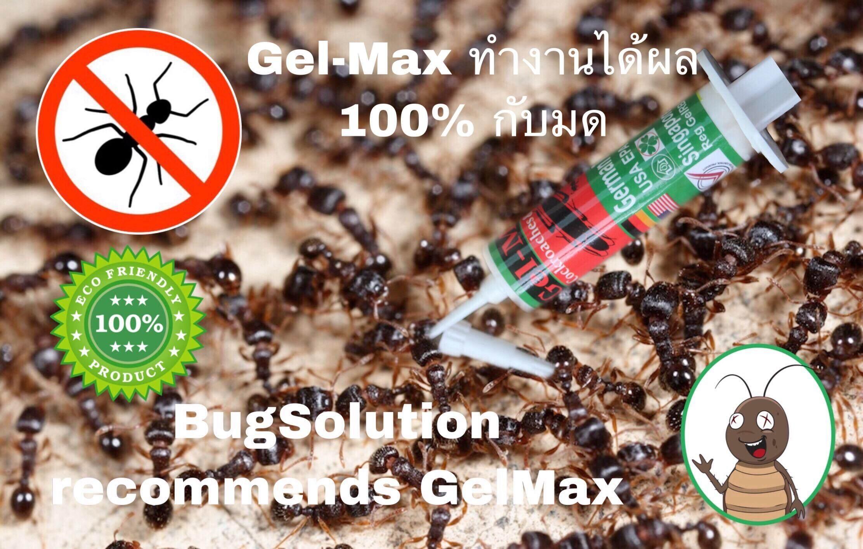 เจล แม็กซ์ ผลิตภัณฑ์ กำจัด มด และแมลงสาบ อย่างสิ้นซาก ตายยกรัง เห็นผล สินค้าปลอดภัยต่อบ้าน และ ร้านอาหาร ด้วยสูตรมาตรฐาน จากเยอรมนี ขายไปแล้วทั่วโลกมากกว่า 1.5 ล้านอัน ราคาถูก ประหยัด ประสิทธิภาพสูง ไม่ซื้อไม่ได้แล้ว !!! 1 หลอด มีปริมาณ 15 กรัม.