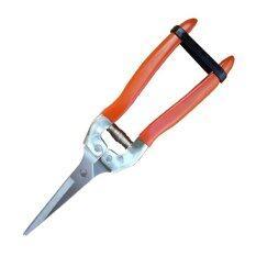 ซื้อ Tools Pro กรรไกรแต่งเล็มกิ่งไม้สแตนเลสปากตรง 8 นิ้ว เชียงใหม่